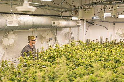 UL508A Panel Shop - Cannabis Control Panels | Xpect Solutions Colorado